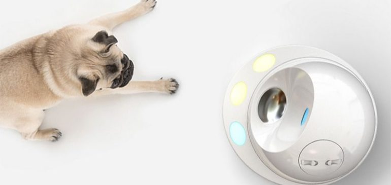 CleverPet is a home robot that people (and dogs) love