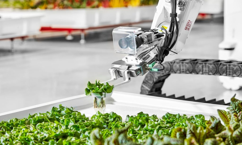 Iron Ox robot picks green vegetables in indoor farm